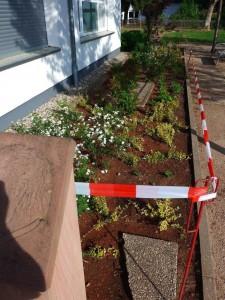 Bepflanzung am Haus der Begegnung