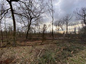 Wald um Rembrücken
